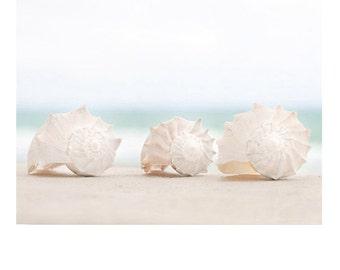 Shell photo, beach decor, seashell print, shell photography, beach photography, home decor, beach cottage, soft, shore house, coastal living