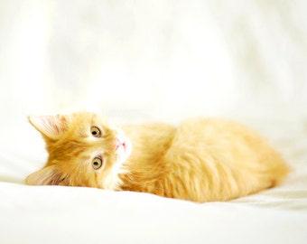 Kitten Photography, Cat Photo, Kitten Print, Orange Tabby Cat Photo, cute kitten, kitty, kitten photo, cat art, nursery decor