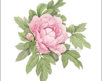 Dark Pink Peony, Small Giclee Print