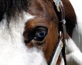 Paint Horse with Blue Eyes Close Up Picture Greeting Card
