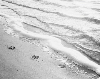 "Black and White Photography - water ripples ocean beach sea paw print grey gray light modern wall art - 11x14, 8x10 Photograph, ""Paw Prints"""