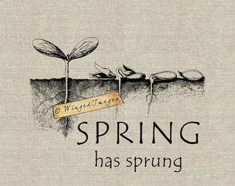 Spring has Sprung. Instant Download Digital Image No.238 Iron-On Transfer to Fabric (burlap, linen) Paper Prints (cards, tags)
