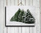 Winter Pines - Winter Photography - Nature Photography - Christmas Tree Photography - Winter art - Winter decor - Christmas decor