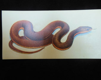Vintage Reptile Flashcard Color Decor Paper Ephemera Red-Bellied Water Snake 1960's (item 12)