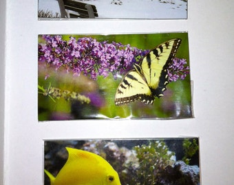 Choice of 1 magnet, Monarch Butterfly, yellow tang fish, coastal bench in snow