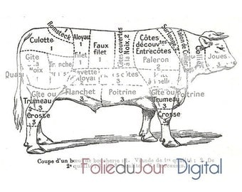 Where Are The Steaks On A Cow Diagram as well Search also Stock Photo Vector Illustration Of Pig Anatomy 126216397 additionally Pig Diagram Cuts Of Meat further Alpaca Anatomy Diagram. on swine cuts of meat diagram