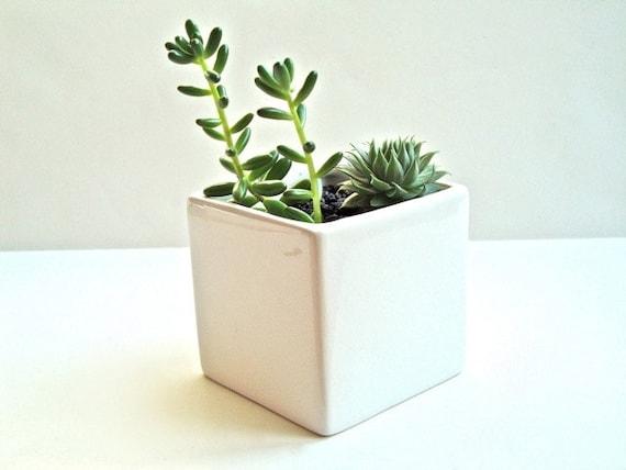 Little Modern Glossy White Ceramic Cube Planter Modern White