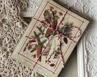 Holiday Note Cards Pine Cones Vintage Botanical Print  Set of 5