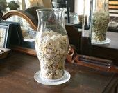 Seashells, vase filler, seashell filler beach coastal decorative filler  diy weddings craft supplies