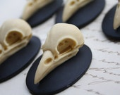 Bird Raven Crow Skull Cameo Cabs Resin Cabochon Taxidermy Animal Steampunk Gothic Goth Skull Black Ivory 40x30mm 5 PIECES