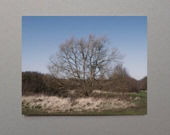 Primitive Art, Wall Art Winter Trees, Blue Sky, Forest Wall Art, Tree Photography, Forest Photography, Art Gift Ideas, Home Wall Art, Rugged