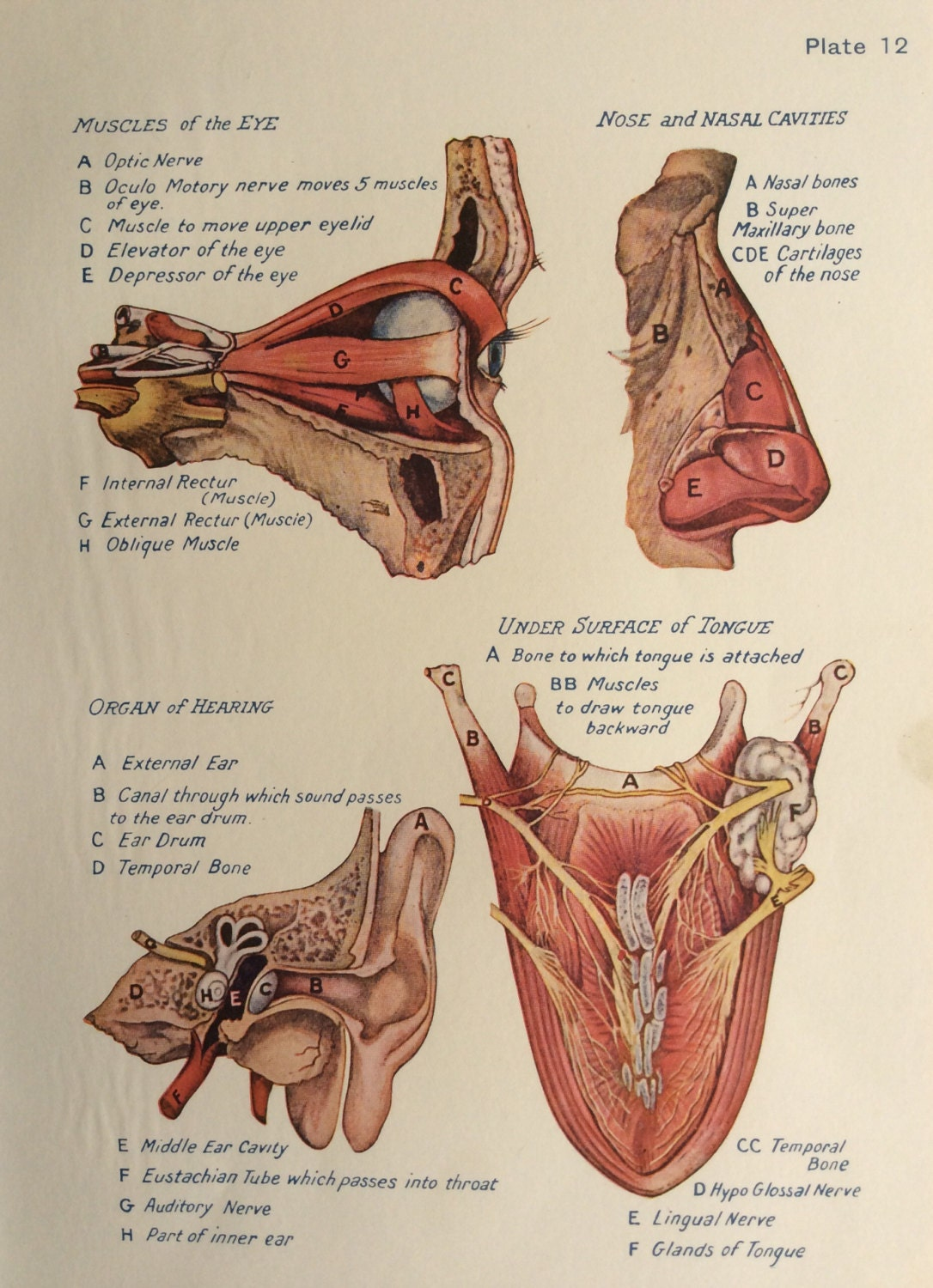 Human anatomy dissection