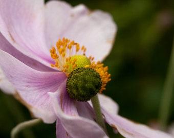 Hug a flower