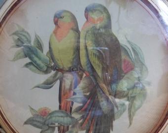 Convex Vintage Parrot Wall Decor