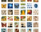 48 SUMMER INCHIES - Butterflies, Gardening, Beach Shells -  Printable Digital Collage Sheet