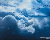 Flock of Birds Flying Into Storm Clouds -  Nature Heaven Winter Autumn Adversity  -  Home Decor Fine Art Print - Wall Art -Blue White Black