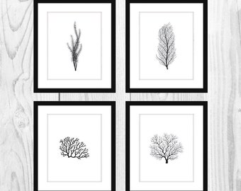"White and Black Coral Printable Bathroom Artwork (Set of 4, 8x10"")"