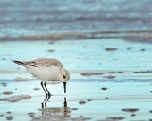 Photo Portrait SANDERLING Bird on the BEACH, Mirrored - 8x10  METALLIC Print - ocean blue, waves, seashore