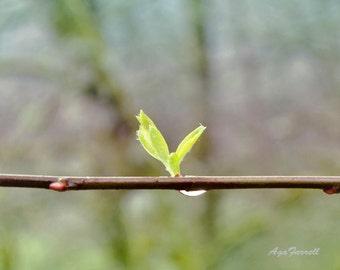 Ethereal Art, Sun Reflection in Dew Drop, Nature Photography, Morning Sun Art, Rain Art, Green Print, Brown