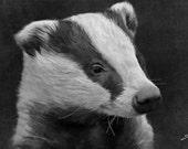 Wildlife art print, wildlife print, wildlife photography, wildlife picture, animal print, animal art, wildlife painting, wildlife, badger