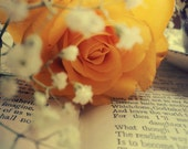 Fine Art Photography Digital Download Yellow Rose Book Printable Art Photo Photograph