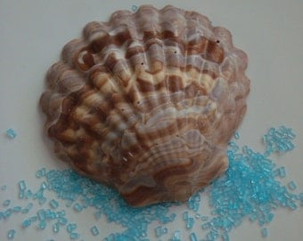 12 Chocolate Swirled Seashell Party Favors Beach Nautical Wedding Anniversary Birthday Candy Shell Sand Ocean