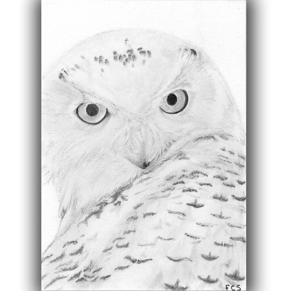Snowy White Owl Drawing Original Aceo Snowy White Owl