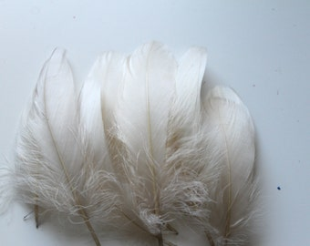 Champagne Goose Nagoire Feathers / 10 Loose Feathers / 4-6 inches