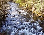 Printable, Woodland Stream Solitude, 4 Sizes, Nature Photography, Photo Art