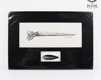 Orthoceras Fossil & Artist Signed Print