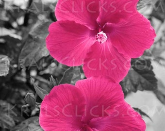 Pink Hibiscus Photograph Valentine Love Sweetheart Flower Photography Fine Digital Art Black White Home or Office Wall Decor Great Gift Idea