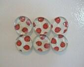 Ladybug Round Glass Magnets, Set of 6