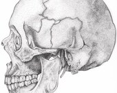Stippled Human Skull Print in Black and White