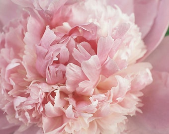 Pink Peony Photo, Peony Photo, Peony Photography, Pink Peonies Photo, Shabby Chic Peonies, Pink Peony Art, Peony Wall Art, Pink Peony Print