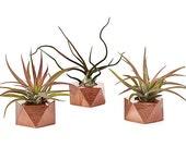 Geometric planters, tiny succulent planter, air plant container wedding favors
