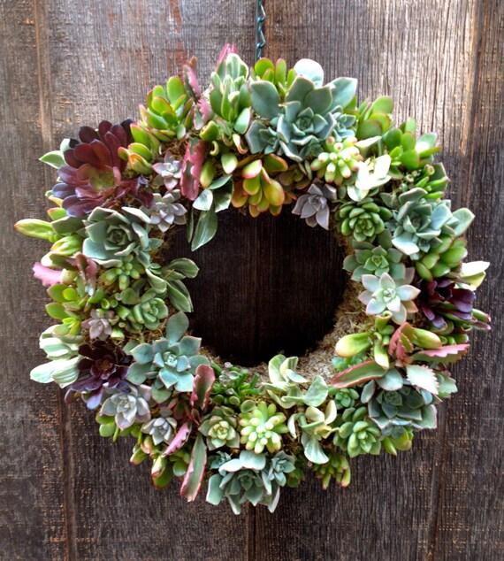 14 Living Succulent Wreath Spring Wreath Great
