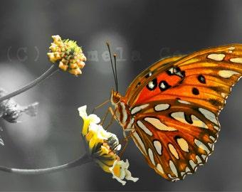 """butterfly art: black white orange butterfly pop of color 8x10"""" print butterfly photo black white orange photo"""