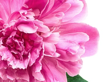 Pink Peony with Green Leaves #061003, fine art flower photography nature wall art home decor print