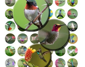 Hummingbirds Humming Birds Digital Images Collage Sheet 1 inch Circles INSTANT Download BC51