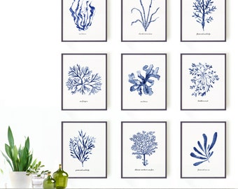 Seaweed watercolor painting, Set of 9 Botanical print set, Blue and white Sea kelp print, Coastal living, Blue decor, Bathroom decor
