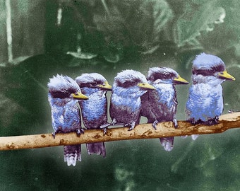 Little Birds On A Branch - Giclee Print