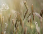 Summer Grass Photograph, MozelleJacobsPhoto, Nature, Green, Light, Natural,Photography, Fine Art, Art,Photo, Image, Photograph, Home Decor