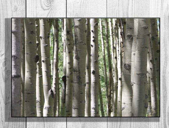 Canvas wall decor aspen tree wood fine art by caughtitoncanvas for Aspen logs for decoration