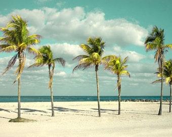 Beach Palms Sandy Beach Photography White sandy beach Miami Florida