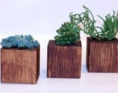 A Brown Cube Shaped Wood Planters - Set of 3 for indoor/outdoor design