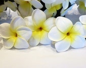 White Yellow Frangipani, Plumeria, Frangipani Flower, Tropical Flower, Beach, Hair Flower, Wedding