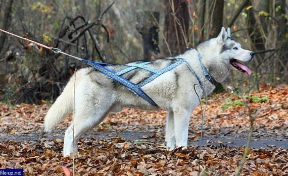 X Back Dog Harness | Get Free Image About Wiring Diagram