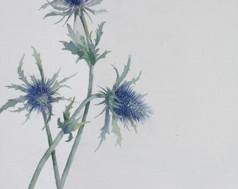 Sea Holly - original watercolour on paper