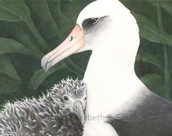 Albatross Pair: Kaloakulua and Parent Print