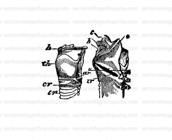 larynx vector clipart anatomy instant download  human